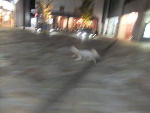 ビションフリーゼトリミングフントヒュッテビションカットスタイルモデル犬画像ビションフリーゼトリミングサロン東京ビションhundehutteビションベアカット_91.jpg