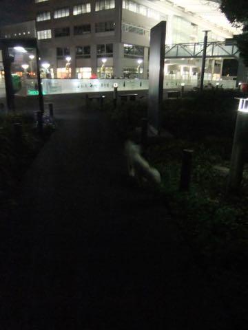ビションフリーゼトリミングフントヒュッテビションカットスタイルモデル犬画像ビションフリーゼトリミングサロン東京ビションhundehutteビションベアカット_101.jpg