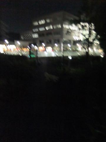 ビションフリーゼトリミングフントヒュッテビションカットスタイルモデル犬画像ビションフリーゼトリミングサロン東京ビションhundehutteビションベアカット_102.jpg