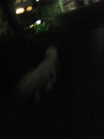 ビションフリーゼトリミングフントヒュッテビションカットスタイルモデル犬画像ビションフリーゼトリミングサロン東京ビションhundehutteビションベアカット_103.jpg