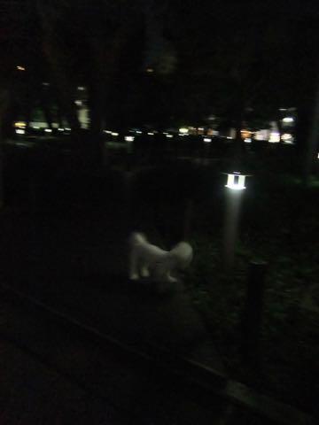 ビションフリーゼトリミングフントヒュッテビションカットスタイルモデル犬画像ビションフリーゼトリミングサロン東京ビションhundehutteビションベアカット_105.jpg