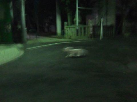 ビションフリーゼトリミングフントヒュッテビションカットスタイルモデル犬画像ビションフリーゼトリミングサロン東京ビションhundehutteビションベアカット_123.jpg