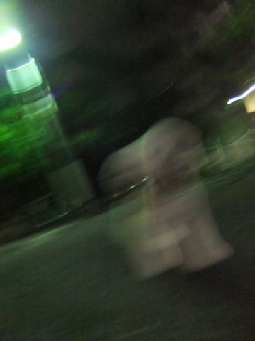 ビションフリーゼトリミングフントヒュッテビションカットスタイルモデル犬画像ビションフリーゼトリミングサロン東京ビションhundehutteビションベアカット_127.jpg