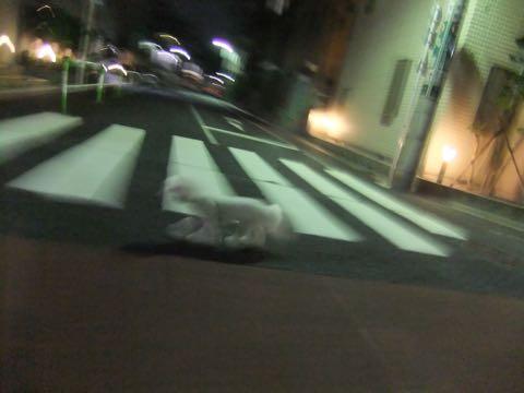 ビションフリーゼトリミングフントヒュッテビションカットスタイルモデル犬画像ビションフリーゼトリミングサロン東京ビションhundehutteビションベアカット_129.jpg