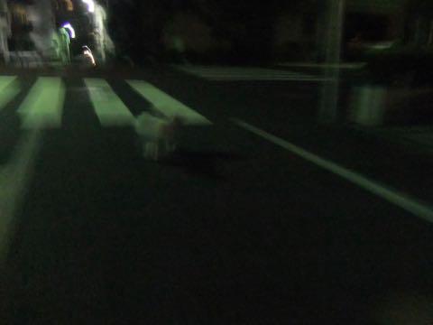 ビションフリーゼトリミングフントヒュッテビションカットスタイルモデル犬画像ビションフリーゼトリミングサロン東京ビションhundehutteビションベアカット_164.jpg