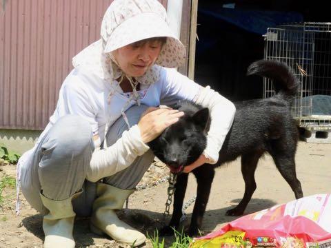 ブリーダー入院、犬24匹の運命は 相次ぐ多頭飼育崩壊.jpg