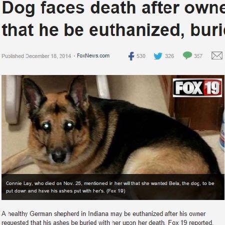 「私が死んだら愛犬にも安楽死を」はアリかナシか。米女性の遺言が物議をかもす。.jpg