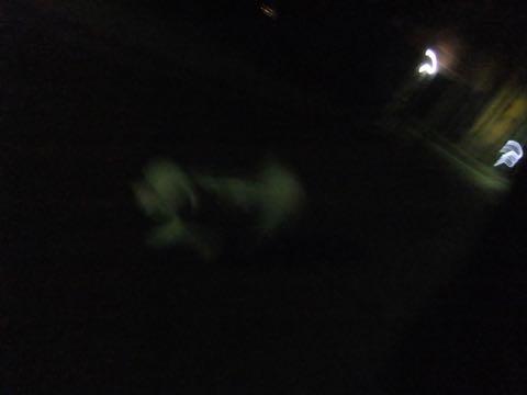 トイ・プードル極小サイズティーカッププードル東京トイプードルトリミング画像フントヒュッテ駒込ビションフリーゼトリミング文京区ペットホテル都内_392.jpg