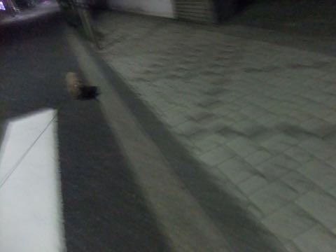 トイ・プードル極小サイズティーカッププードル東京トイプードルトリミング画像フントヒュッテ駒込ビションフリーゼトリミング文京区ペットホテル都内_394.jpg