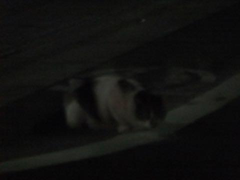 トイ・プードル極小サイズティーカッププードル東京トイプードルトリミング画像フントヒュッテ駒込ビションフリーゼトリミング文京区ペットホテル都内_407.jpg