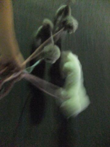 ビションフリーゼトリミング文京区フントヒュッテ駒込ビションフリーゼまるくカットトリミングサロン画像ビションフリーゼ大きく丸い頭画像ビション毛量東京_347.jpg
