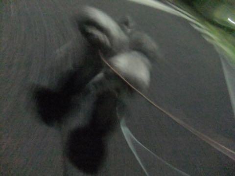 トイプードルトリミング都内フントヒュッテ駒込トイプーカット画像文京区犬歯磨き歯垢歯石除去ゼオライトデンタルケア東京ペットホテル犬ハーブパック効果_350.jpg