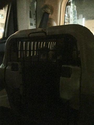 ヨークシャー・テリアトリミング画像ヨーキートリミング文京区フントヒュッテ駒込トリミングサロン東京ヨーキーカットスタイル画像_86.jpg