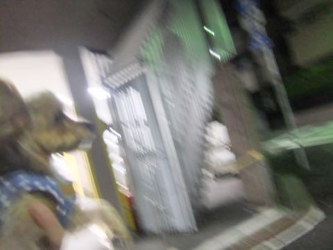ビションフリーゼトリミング文京区フントヒュッテ駒込ビションフリーゼまるくカットトリミングサロン画像ビションフリーゼ大きく丸い頭画像ビション毛量東京_420.jpg
