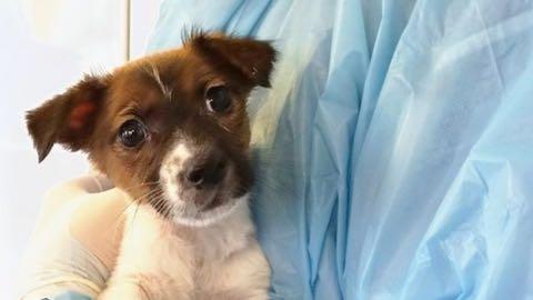 英イングランド、子犬・子猫の販売禁止へ 生後6カ月未満_2.jpg