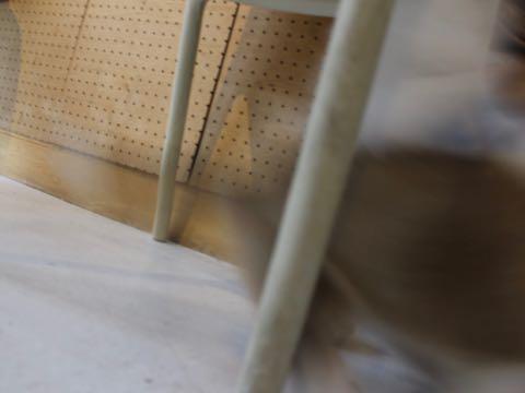 ビションフリーゼトリミング文京区フントヒュッテ駒込hundehutteビション子犬トリミング都内こいぬビションチャンピオン犬血統毛量東京かわいいビション画像_145.jpg