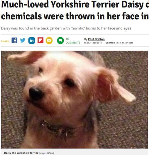何者かが愛犬に化学薬品浴びせ安楽死に 捜査官「どれだけ辛い思いをしたか」(英).jpg