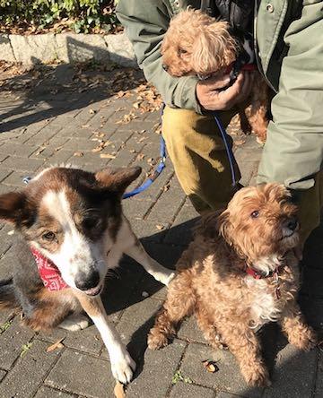"""河川敷の""""ホームレス犬"""" 老いてから救出、初めての室内暮らし 3a.jpg"""