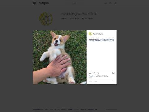 インスタ Instagram フントヒュッテ hundehutte インスタグラム パソコンから投稿 Mac マック インスタ始めた 犬 いぬ トリミング アプリ タグ 1.jpg