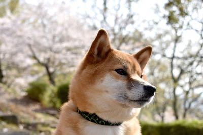 歴史が古い犬種5選_2.jpg