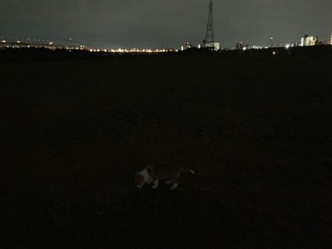 ウェルシュ・コーギー・ペンブロークこいぬ情報フントヒュッテウェルシュコーギーペンブローク子犬画像コーギーしっぽ付き尻尾付きしっぽつき断尾していないコーギー出産情報性格子犬の社会化コーギー家族募集中 Welsh Corgi Pembroke _ 698.jpg