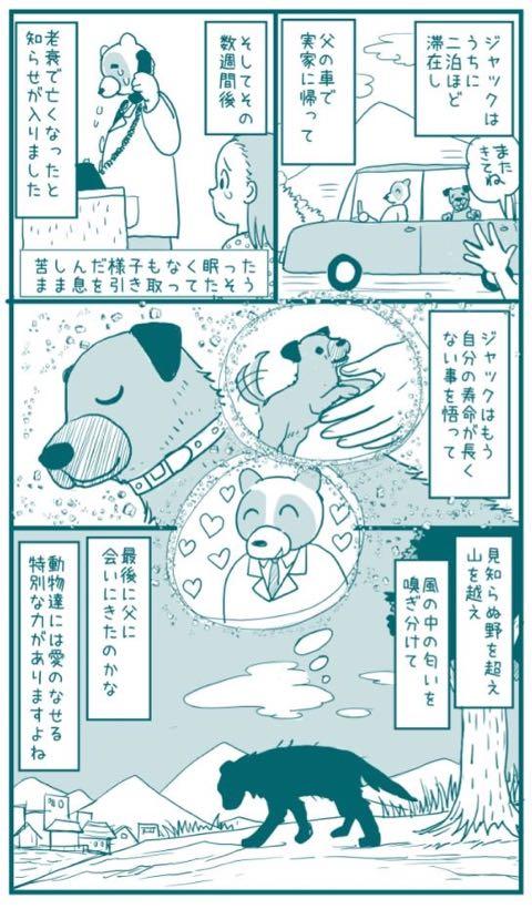 """父の実家の""""老犬""""が20キロ離れた家に来た漫画 その数週間後…「泣いてしまった」と感動の嵐_2.jpg"""