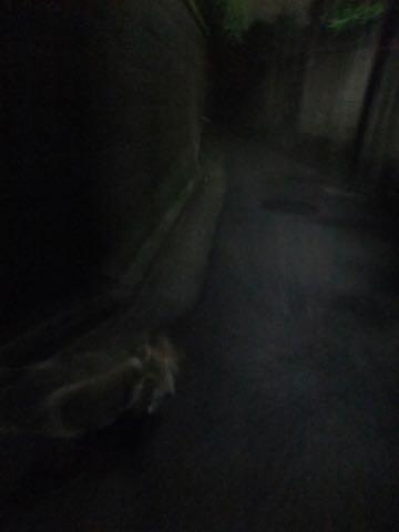 ウェルシュ・コーギー・ペンブロークこいぬ情報フントヒュッテウェルシュコーギーペンブローク子犬画像コーギーしっぽ付き尻尾付きしっぽつき断尾していないコーギー出産情報性格子犬の社会化コーギー家族募集中 Welsh Corgi Pembroke _ 801.jpg
