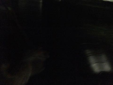 ウェルシュ・コーギー・ペンブロークこいぬ情報フントヒュッテウェルシュコーギーペンブローク子犬画像コーギーしっぽ付き尻尾付きしっぽつき断尾していないコーギー出産情報性格子犬の社会化コーギー家族募集中 Welsh Corgi Pembroke _ 820.jpg