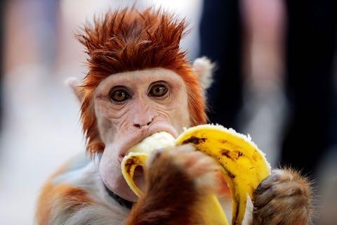 いまのフルーツは動物たちに毒、豪動物園が「果物断ち」始める.jpg