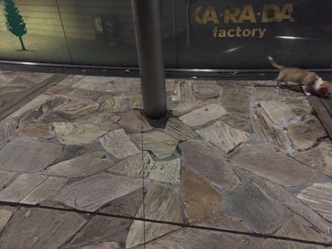 ウェルシュ・コーギー・ペンブロークこいぬ情報フントヒュッテウェルシュコーギーペンブローク子犬画像コーギーしっぽ付き尻尾付きしっぽつき断尾していないコーギー出産情報性格子犬の社会化コーギー家族募集中 Welsh Corgi Pembroke _ 962.jpg