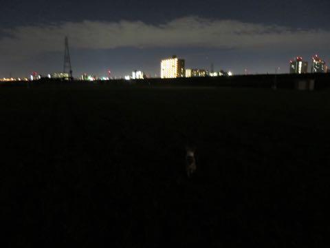 ウェルシュ・コーギー・ペンブロークこいぬ情報フントヒュッテウェルシュコーギーペンブローク子犬画像コーギーしっぽ付き尻尾付きしっぽつき断尾していないコーギー出産情報性格子犬の社会化コーギー家族募集中 Welsh Corgi Pembroke _ 984.jpg