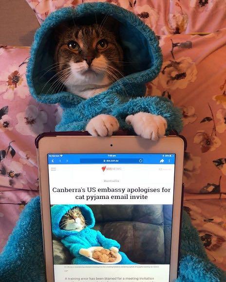 在豪アメリカ大使館、ネコの写真を誤送信して謝罪 _ 2.jpg