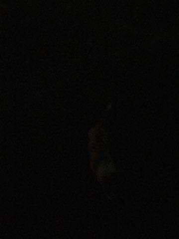 ウェルシュ・コーギー・ペンブロークこいぬ情報フントヒュッテウェルシュコーギーペンブローク子犬画像コーギーしっぽ付き尻尾付きしっぽつき断尾していないコーギー出産情報性格子犬の社会化コーギー家族募集中 Welsh Corgi Pembroke _ 1201.jpg