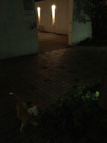ウェルシュ・コーギー・ペンブロークこいぬ情報フントヒュッテウェルシュコーギーペンブローク子犬画像コーギーしっぽ付き尻尾付きしっぽつき断尾していないコーギー出産情報性格子犬の社会化コーギー家族募集中 Welsh Corgi Pembroke _ 1243.jpg