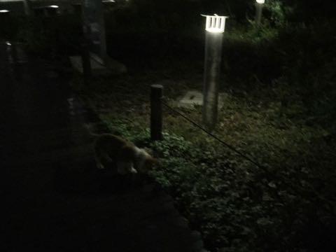 ウェルシュ・コーギー・ペンブロークこいぬ情報フントヒュッテウェルシュコーギーペンブローク子犬画像コーギーしっぽ付き尻尾付きしっぽつき断尾していないコーギー出産情報性格子犬の社会化コーギー家族募集中 Welsh Corgi Pembroke _ 1251.jpg