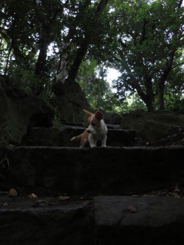 ウェルシュ・コーギー・ペンブロークこいぬ情報フントヒュッテウェルシュコーギーペンブローク子犬画像コーギーしっぽ付き尻尾付きしっぽつき断尾していないコーギー出産情報性格子犬の社会化コーギー家族募集中 Welsh Corgi Pembroke _ 1390.jpg