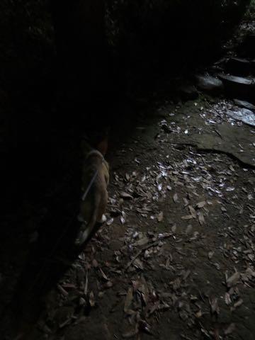 ウェルシュ・コーギー・ペンブロークこいぬ情報フントヒュッテウェルシュコーギーペンブローク子犬画像コーギーしっぽ付き尻尾付きしっぽつき断尾していないコーギー出産情報性格子犬の社会化コーギー家族募集中 Welsh Corgi Pembroke _ 1436.jpg