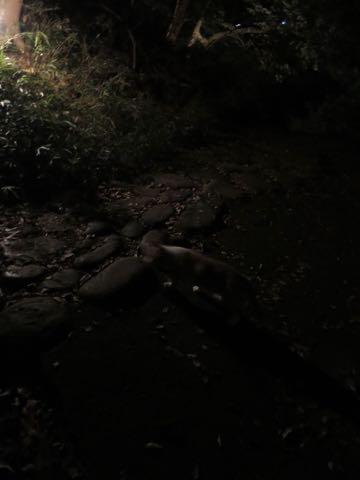 ウェルシュ・コーギー・ペンブロークこいぬ情報フントヒュッテウェルシュコーギーペンブローク子犬画像コーギーしっぽ付き尻尾付きしっぽつき断尾していないコーギー出産情報性格子犬の社会化コーギー家族募集中 Welsh Corgi Pembroke _ 1535.jpg