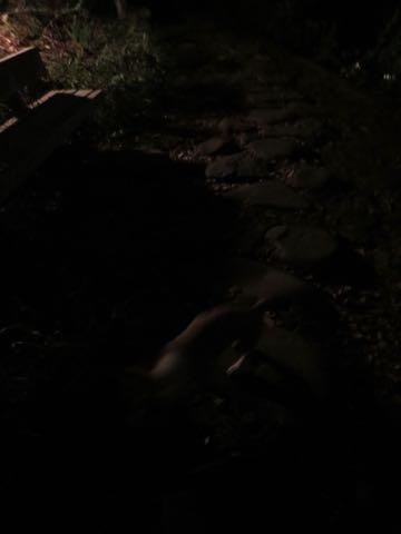 ウェルシュ・コーギー・ペンブロークこいぬ情報フントヒュッテウェルシュコーギーペンブローク子犬画像コーギーしっぽ付き尻尾付きしっぽつき断尾していないコーギー出産情報性格子犬の社会化コーギー家族募集中 Welsh Corgi Pembroke _ 1538.jpg