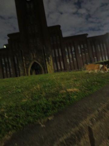 ウェルシュ・コーギー・ペンブロークこいぬ情報フントヒュッテウェルシュコーギーペンブローク子犬画像コーギーしっぽ付き尻尾付きしっぽつき断尾していないコーギー出産情報性格子犬の社会化コーギー家族募集中 Welsh Corgi Pembroke _ 1560.jpg