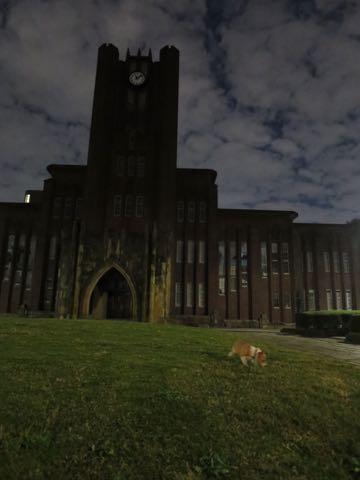 ウェルシュ・コーギー・ペンブロークこいぬ情報フントヒュッテウェルシュコーギーペンブローク子犬画像コーギーしっぽ付き尻尾付きしっぽつき断尾していないコーギー出産情報性格子犬の社会化コーギー家族募集中 Welsh Corgi Pembroke _ 1561.jpg