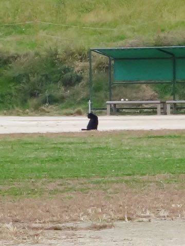 ウェルシュ・コーギー・ペンブロークこいぬ情報フントヒュッテウェルシュコーギーペンブローク子犬画像コーギーしっぽ付き尻尾付きしっぽつき断尾していないコーギー出産情報性格子犬の社会化コーギー家族募集中 Welsh Corgi Pembroke _ 1596.jpg