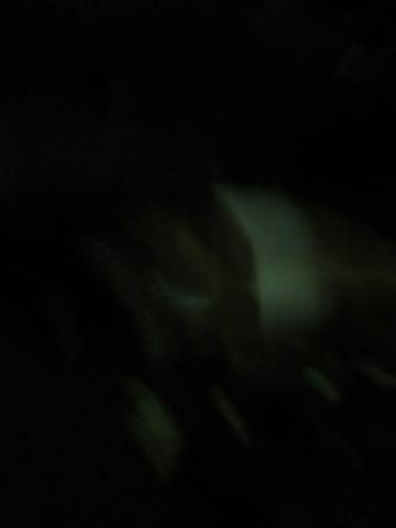 ウェルシュ・コーギー・ペンブロークこいぬ情報フントヒュッテウェルシュコーギーペンブローク子犬画像コーギーしっぽ付き尻尾付きしっぽつき断尾していないコーギー出産情報性格子犬の社会化コーギー家族募集中 Welsh Corgi Pembroke _ 1629.jpg