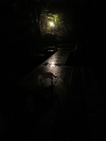 ウェルシュ・コーギー・ペンブロークこいぬ情報フントヒュッテウェルシュコーギーペンブローク子犬画像コーギーしっぽ付き尻尾付きしっぽつき断尾していないコーギー出産情報性格子犬の社会化コーギー家族募集中 Welsh Corgi Pembroke _ 1636.jpg