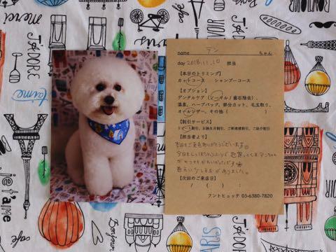 トリミング報告書 トリミングサロン フントヒュッテ 東京 文京区 犬のカット カットスタイル 画像 愛犬の健康状態 コミュニケーション 2.jpg