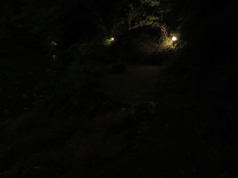 ウェルシュ・コーギー・ペンブロークこいぬ情報フントヒュッテウェルシュコーギーペンブローク子犬画像コーギーしっぽ付き尻尾付きしっぽつき断尾していないコーギー出産情報性格子犬の社会化コーギー家族募集中 Welsh Corgi Pembroke _ 1646.jpg