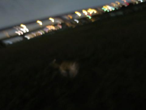 ウェルシュ・コーギー・ペンブロークこいぬ情報フントヒュッテウェルシュコーギーペンブローク子犬画像コーギーしっぽ付き尻尾付きしっぽつき断尾していないコーギー出産情報性格子犬の社会化コーギー家族募集中 Welsh Corgi Pembroke _ 1660.jpg