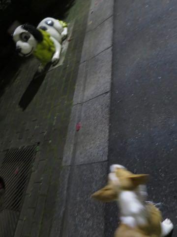 ウェルシュ・コーギー・ペンブロークこいぬ情報フントヒュッテウェルシュコーギーペンブローク子犬画像コーギーしっぽ付き尻尾付きしっぽつき断尾していないコーギー出産情報性格子犬の社会化コーギー家族募集中 Welsh Corgi Pembroke _ 1701.jpg