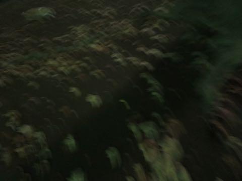 ウェルシュ・コーギー・ペンブロークこいぬ情報フントヒュッテウェルシュコーギーペンブローク子犬画像コーギーしっぽ付き尻尾付きしっぽつき断尾していないコーギー出産情報性格子犬の社会化コーギー家族募集中 Welsh Corgi Pembroke _ 1703.jpg