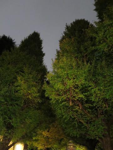 ウェルシュ・コーギー・ペンブロークこいぬ情報フントヒュッテウェルシュコーギーペンブローク子犬画像コーギーしっぽ付き尻尾付きしっぽつき断尾していないコーギー出産情報性格子犬の社会化コーギー家族募集中 Welsh Corgi Pembroke _ 1722.jpg